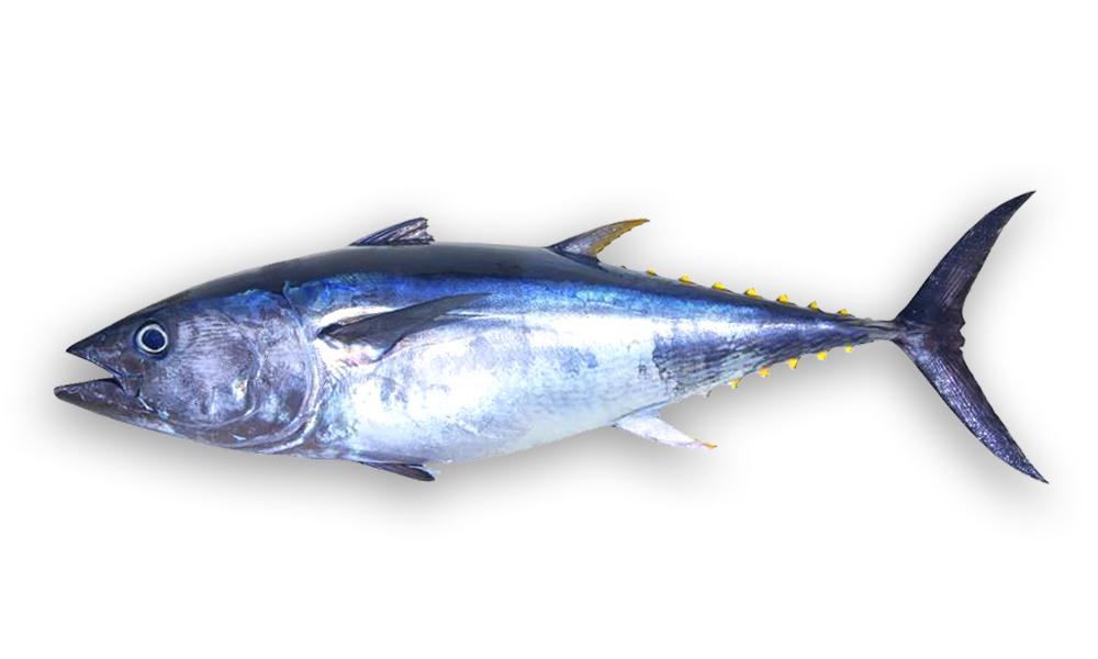 sea foods sausage house tuna